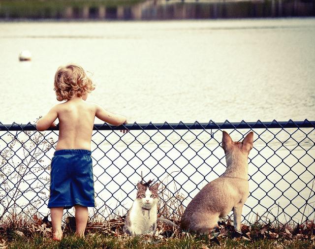 chłopiec z psem i kotem