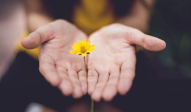 Dłonie z kwiatem
